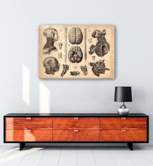 beyin-anatomi-kanvas-tablo