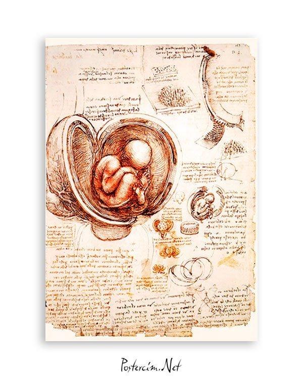 fetus-posteri