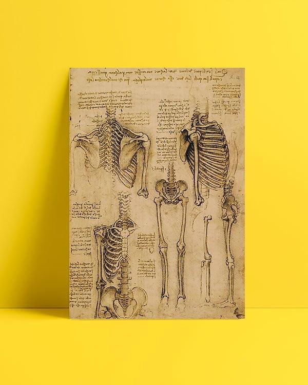 iskelet-sistemi-bilimsel-afis