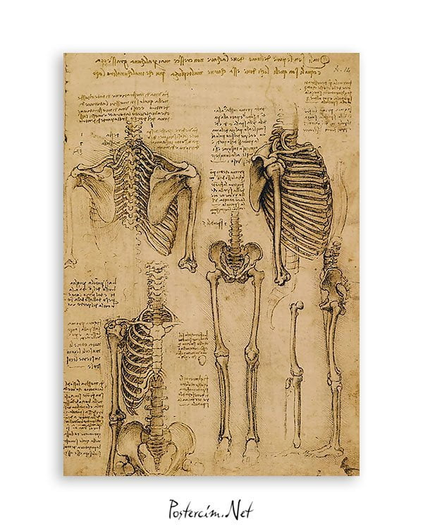 iskelet-sistemi-bilimsel-poster