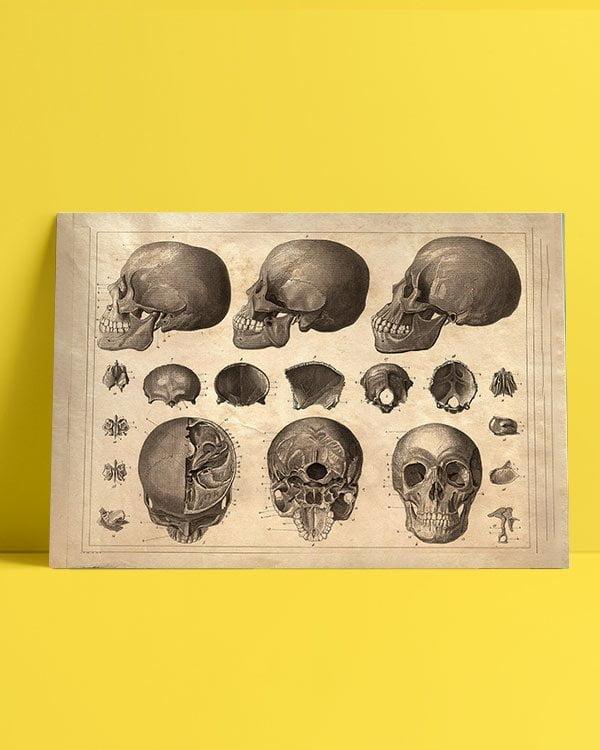 kafatasi-bilimsel-afis