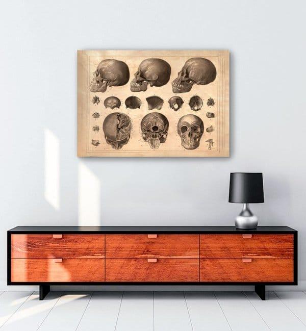 kafatasi-bilimsel-kanvas-tablo