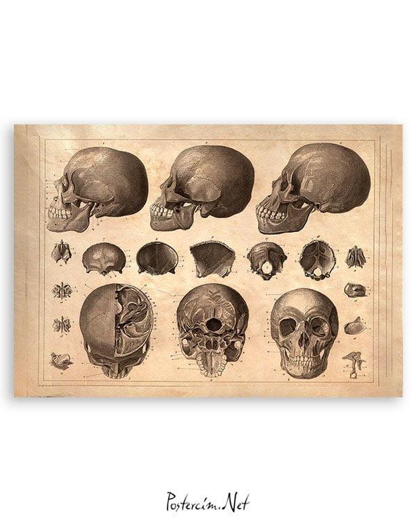 kafatasi-bilimsel-poster