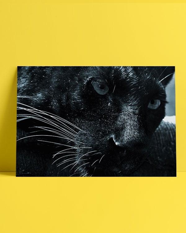 jaguar-afis-satin-al