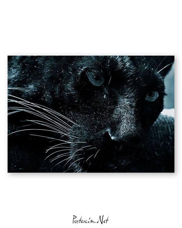jaguar-poster-satin-al