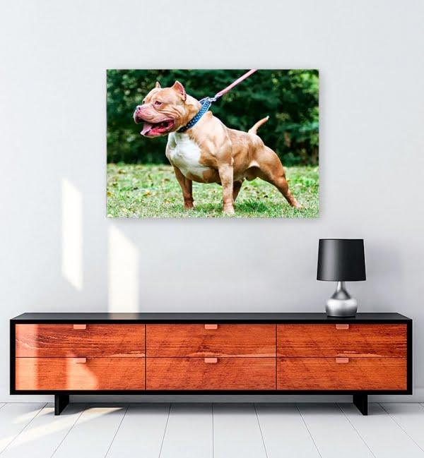 pitbull-kopek-kanvas-tablo-satin-al