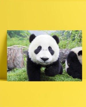Panda posteri
