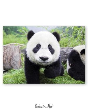 Panda afişi