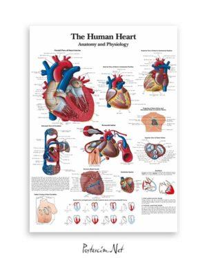 İnsan Kalbi Anatomisi ve Fizyolojisi posteri