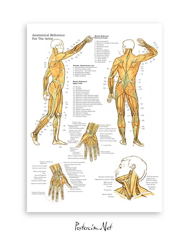 Kas ve Kemik Sistemi 2 posteri