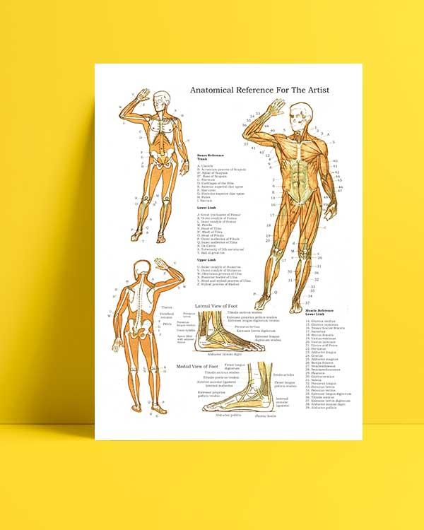 Kas ve Kemik Sistemi afişi
