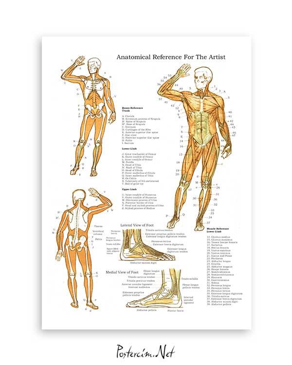 Kas ve Kemik Sistemi posteri