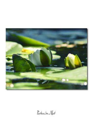 Nilüfer Çiçeği posteri
