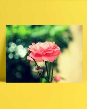 Farsejin Pembe Çiçeği afişi