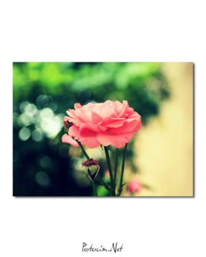 Farsejin Pembe Çiçeği posteri