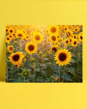 Günebakan Çiçekleri 2 afişi