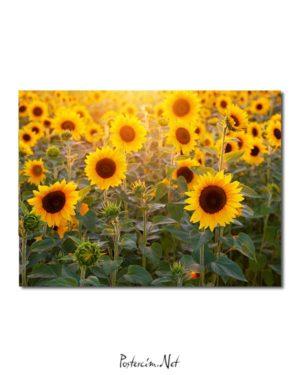 Günebakan Çiçekleri 2 posteri