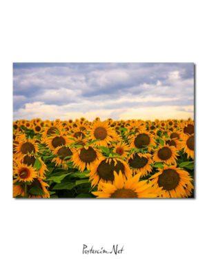 Günebakan Çiçekleri posteri