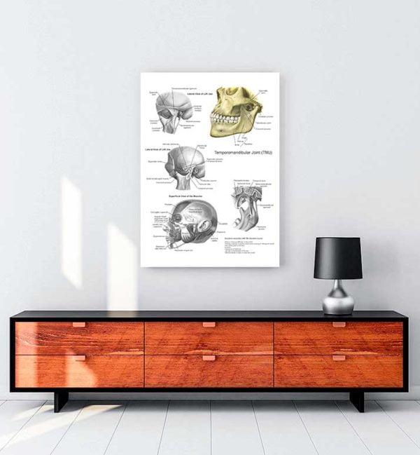 Tmja Anatomisi kanvas tablo