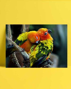 Colorful Birds afiş