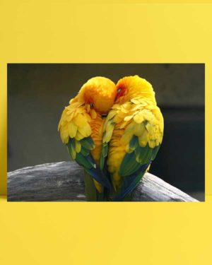 Love Bird afiş