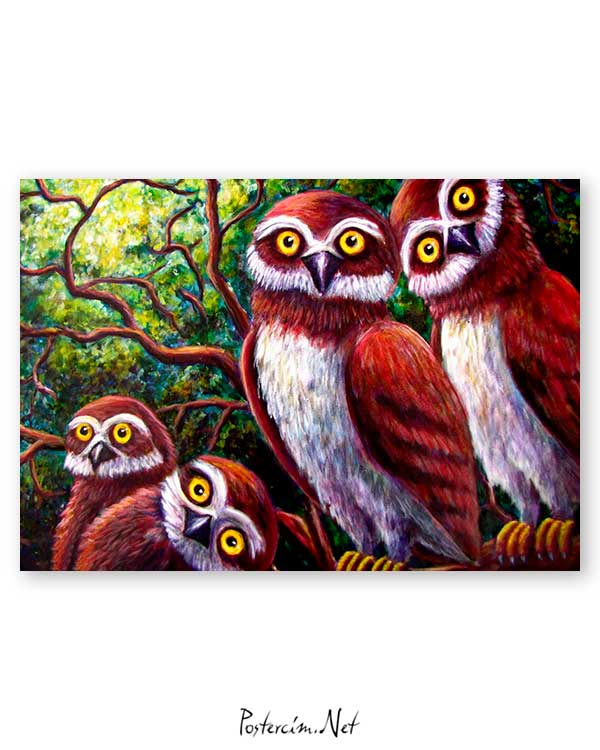 Surprised Owls poster
