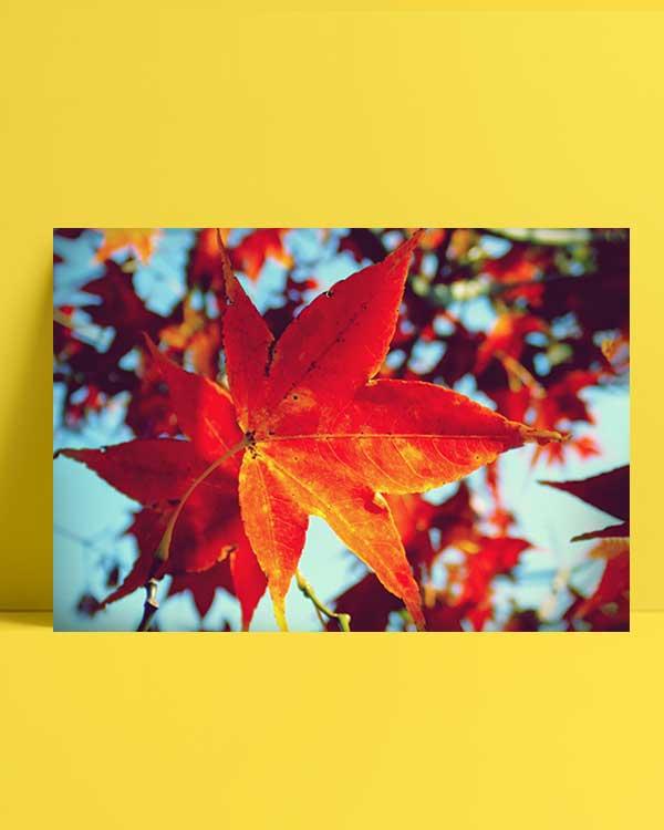 Autumn afiş