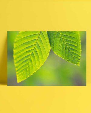 Çift Yaprak afiş