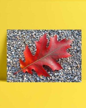 Leaves afiş