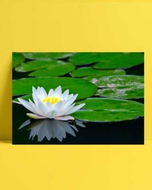 Sarı Beyaz Nilüfer afiş