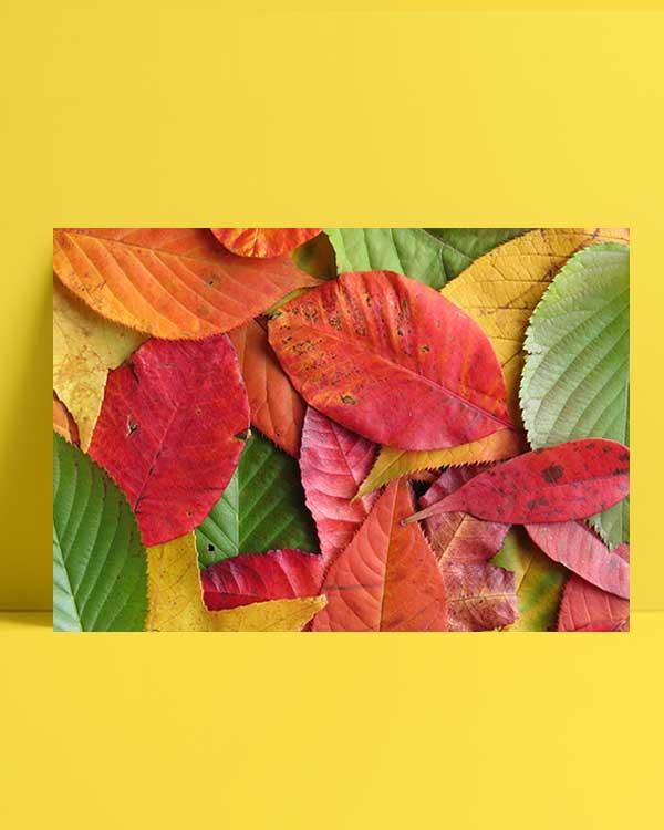 Sonbaharın Beş Tonu afiş