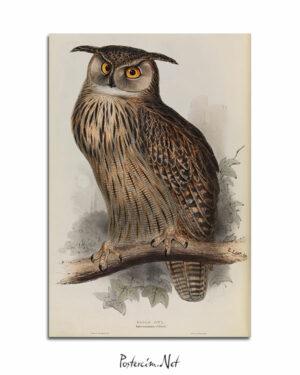 Eagle Owl afişi