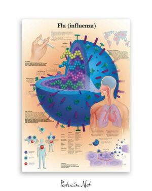 Flu (influenza) afişi