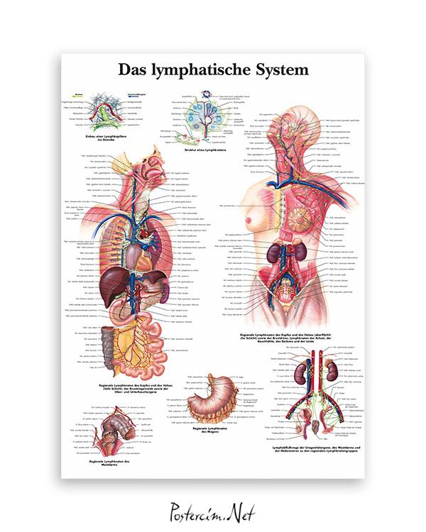 Lenfatik sistem afişi