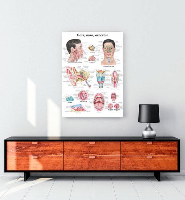 Kulak-Burun-Boğaz Anatomisi kanvas tablo