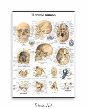 İnsan Kafatası afişi