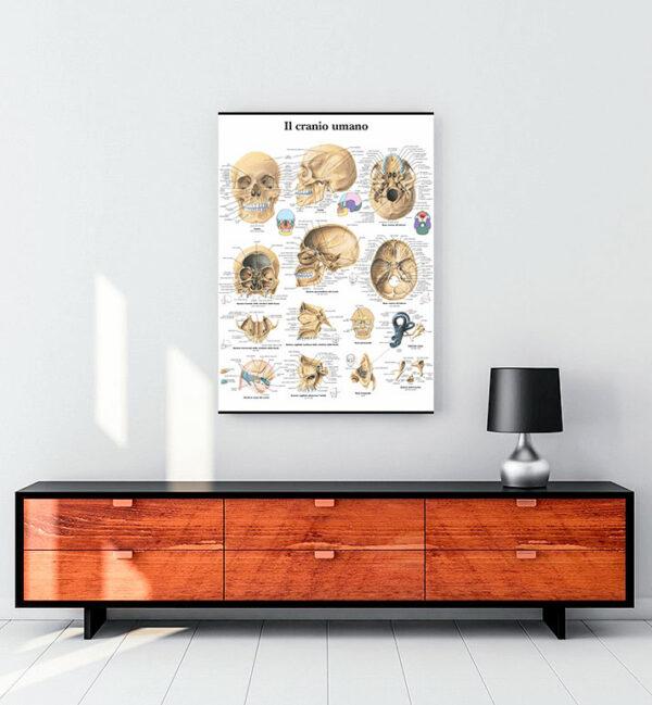İnsan Kafatası kanvas tablo