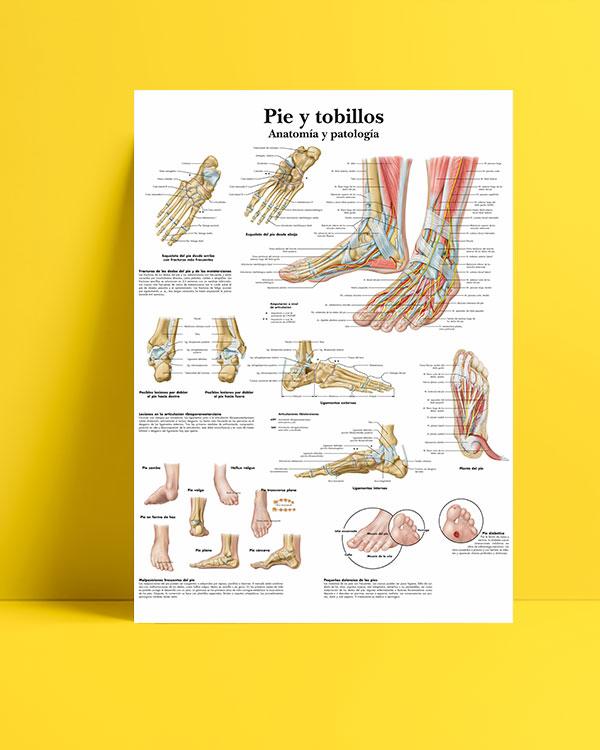 Ayak-ve-bilek-anatomisi-posteri
