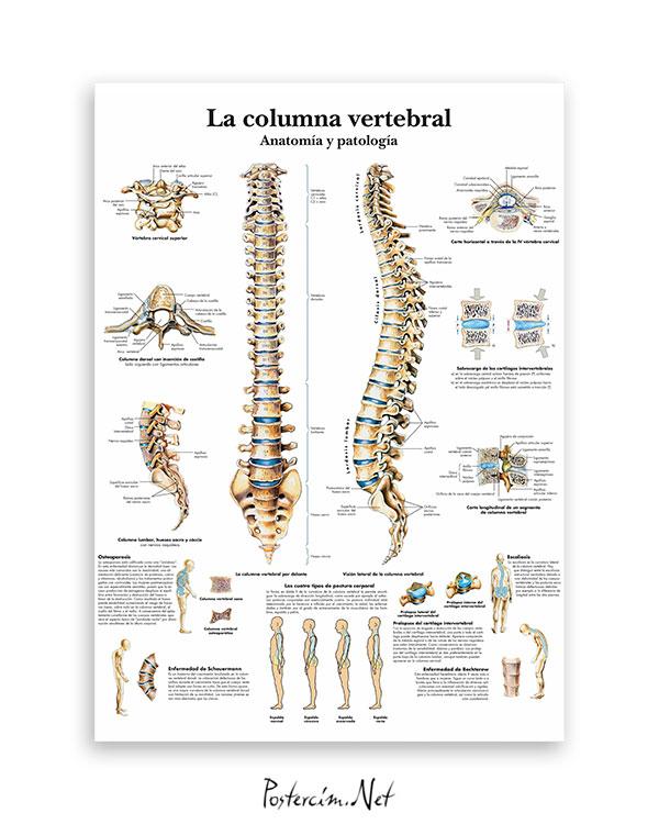 Omurga Anatomisi ve Patoloji afisi