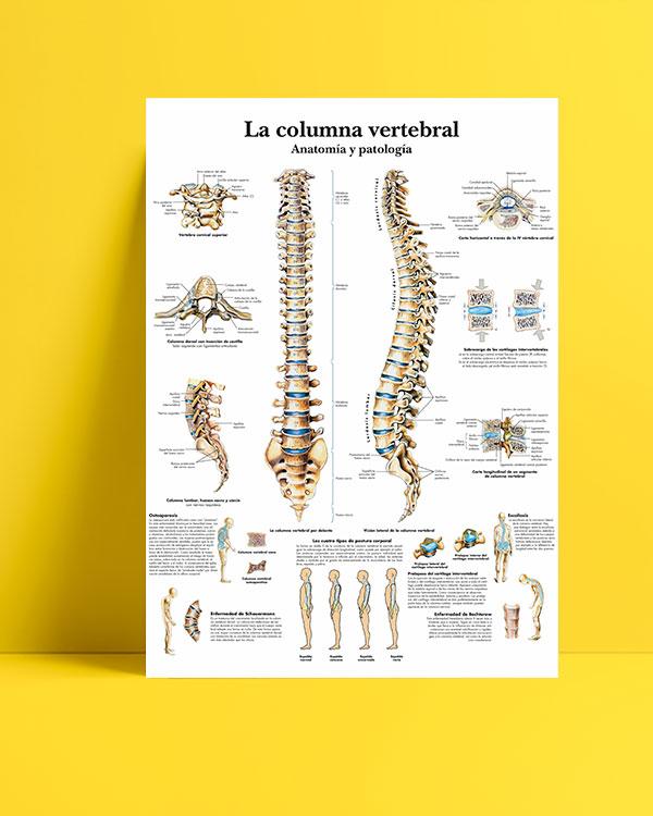 Omurga Anatomisi ve Patoloji posteri