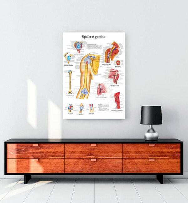 Omuz-ve-dirsek-anatomisi-kanvas-tablo