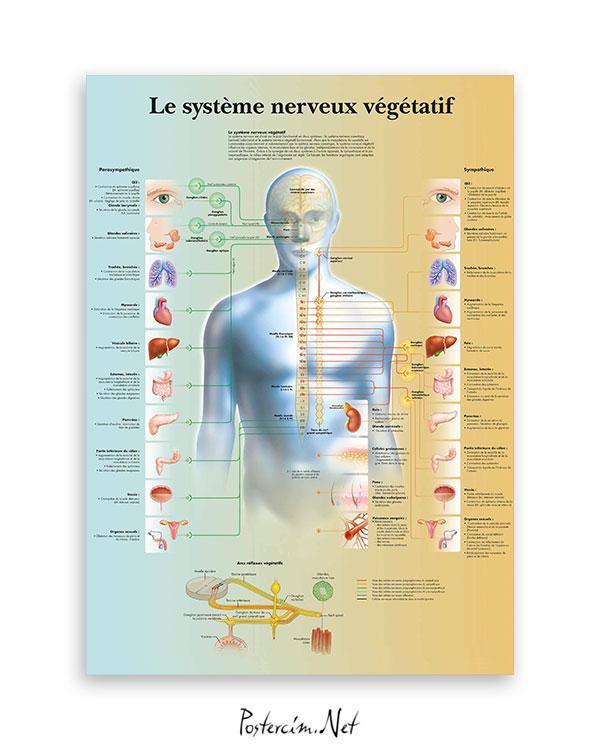 Vejetatif-sinir-sistemi-afisi