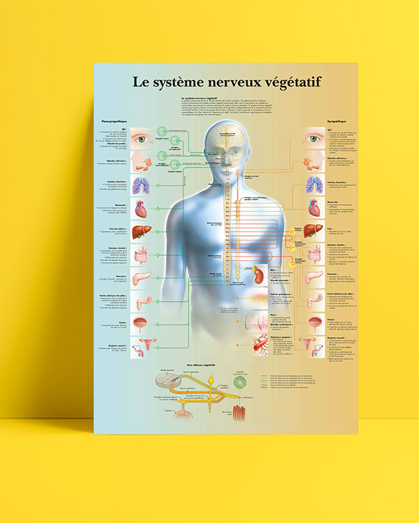 Vejetatif-sinir-sistemi-posteri