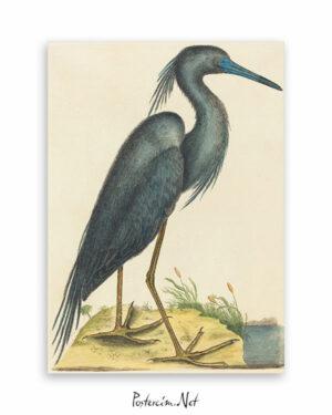 mavi balıkçıl afisi