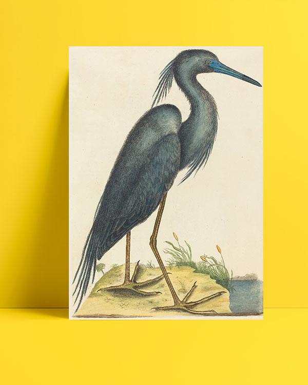 mavi balıkçıl posteri