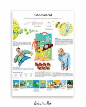 Cholesterol-kolesterol-afisi