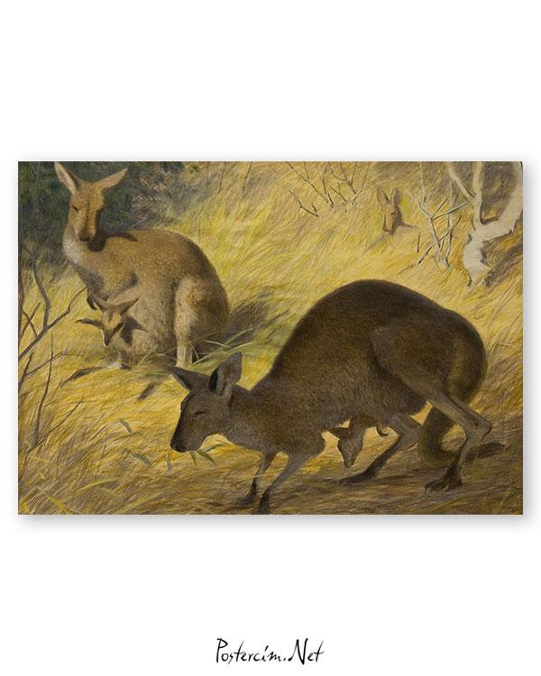 kangurular-afisi