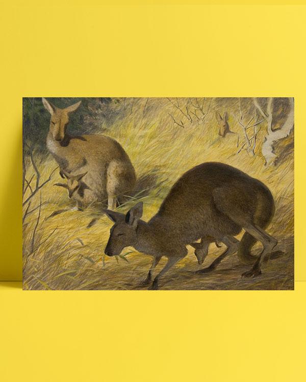 kangurular-posteri