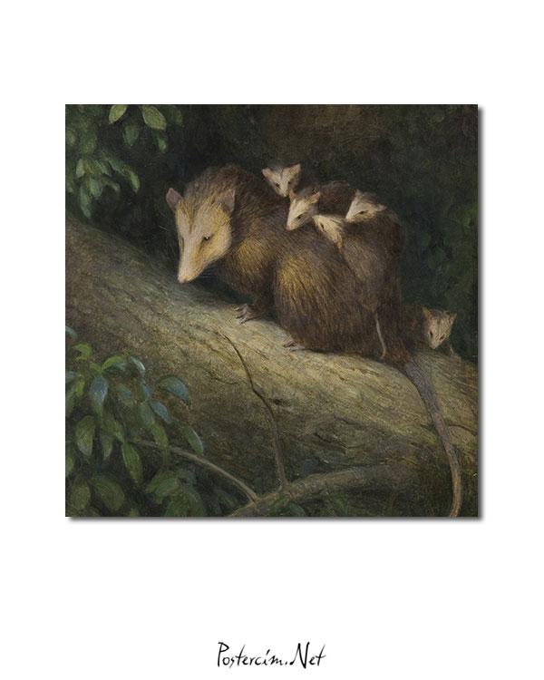 keseli-sıçan-ve-yavruları-afisi