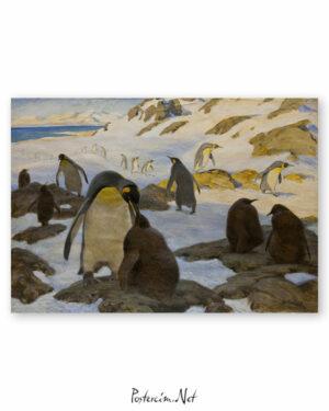penguen-kolonisi-afisi